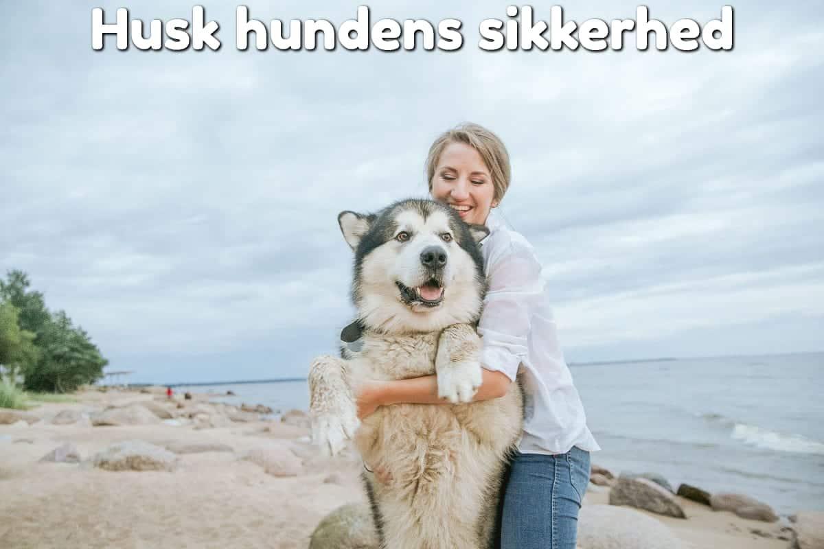 Husk hundens sikkerhed